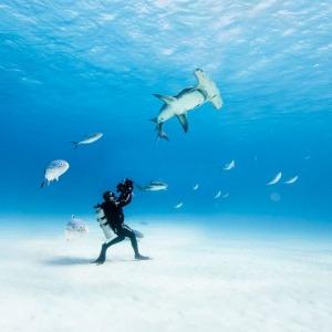 OCEAN FILM FESTIVAL WORLD TOUR – Cinema Politeama
